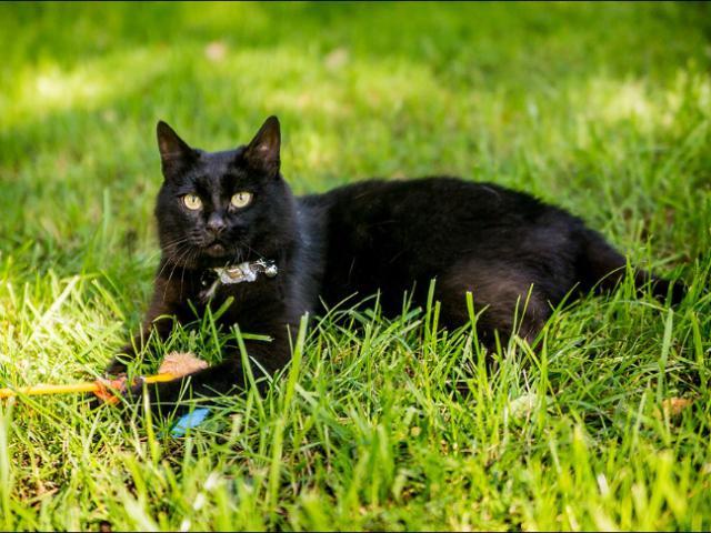 Отдам в дар: Шикарный черный кот в добрые руки