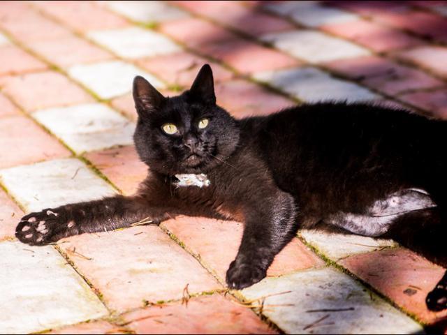 Отдам в дар: Шикарный черный кот в добрые руки фото3