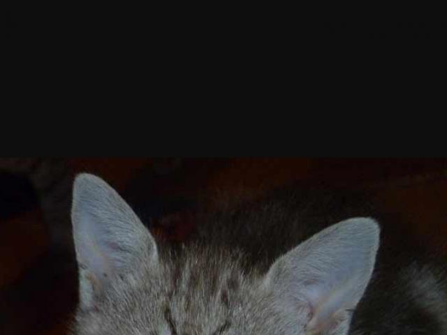 Отдам в дар: Котята в добрые ручки