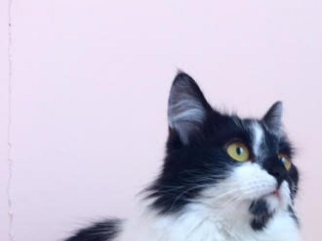 Отдам в дар: Молодая целеустремленная кошечка Маркиза срочно ищ фото3