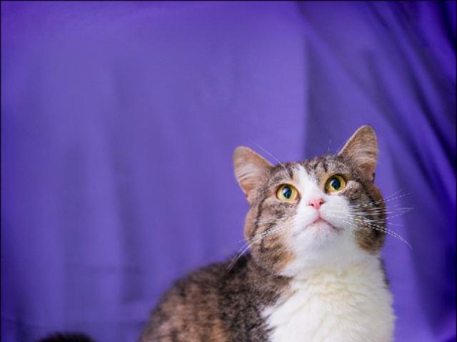 Отдам в дар: Кот Тимоша ищет дом фото3