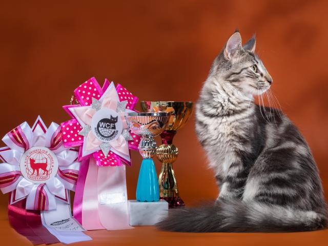 Продаю: Норвежские Лесные котята от титулованных родителей