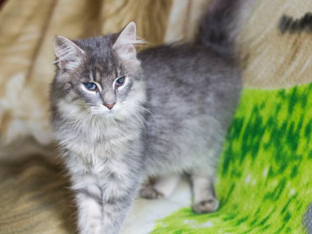 Отдам в дар: Котёнок Федя фото2