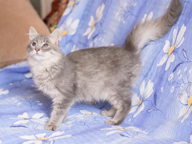Отдам в дар: Котёнок Федя фото3