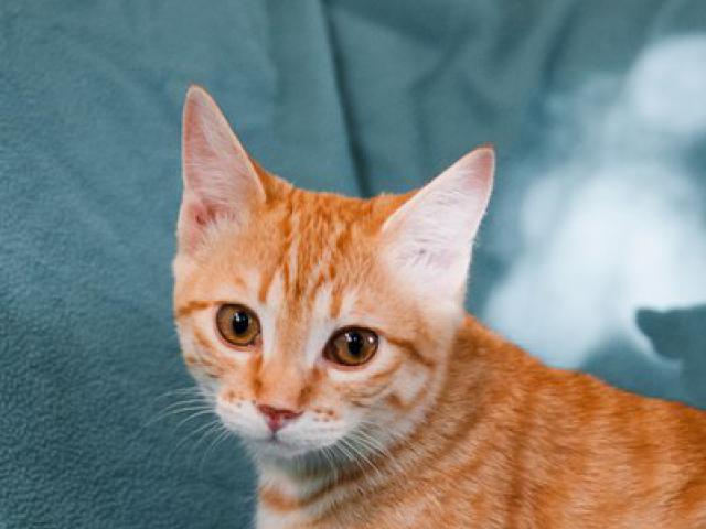 Отдам в дар: Рыжие котята в добрые руки