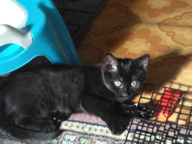 Отдам в дар: Отдам черного котенка