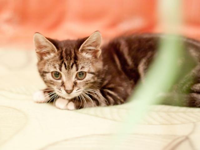 Отдам в дар: Котенок Ватрушка в добрые руки