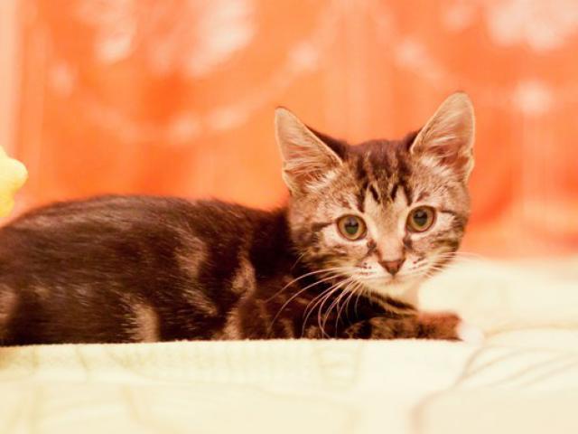 Отдам в дар: Котенок Ватрушка в добрые руки фото3