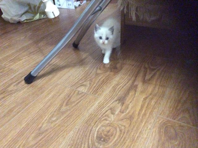 Отдам в дар: Отдам котёнка в дар  фото2