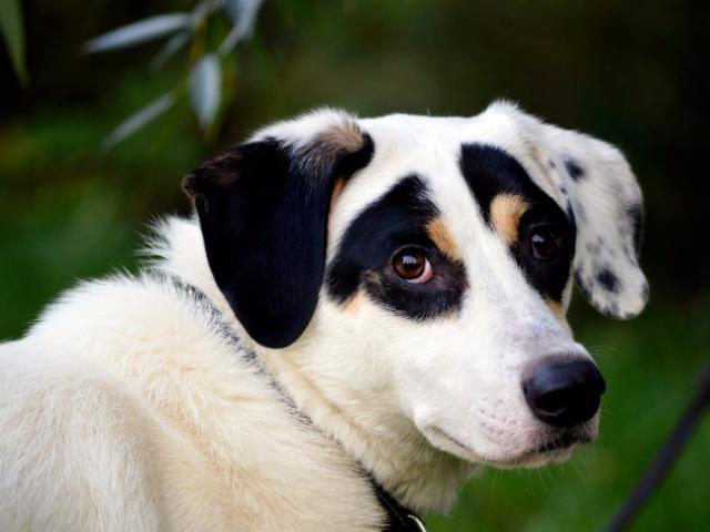 Отдам в дар: Молодой пес Ульф ищет себе дом