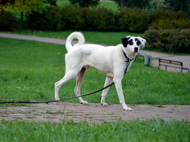 Отдам в дар: Молодой пес Ульф ищет себе дом  фото2