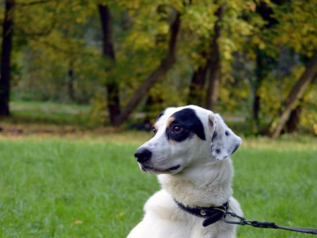 Отдам в дар: Молодой пес Ульф ищет себе дом  фото3