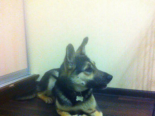 Отдам в дар: Собака Терри в добрые руки фото2