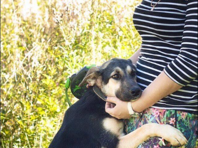 Отдам в дар: Собака Терри в добрые руки фото3