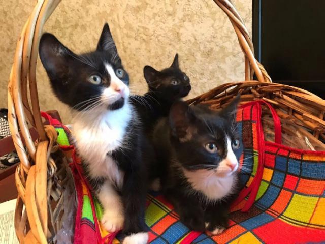 Отдам в дар: Отдам в добрые руки трех котят