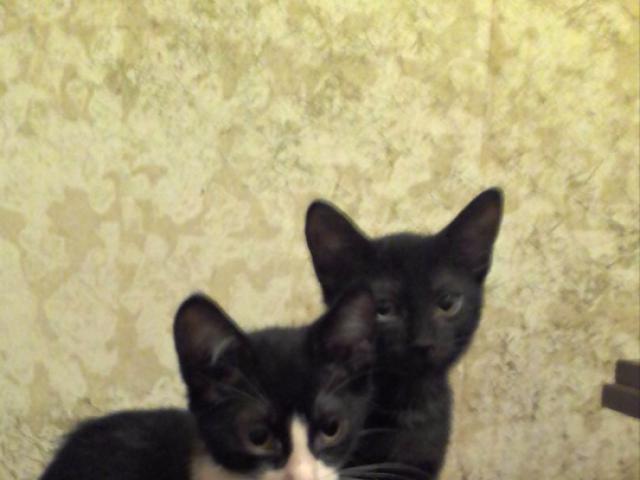 Отдам в дар: Отдам в добрые руки трех котят фото3
