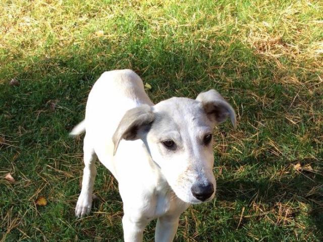 Отдам в дар: Застенчивый щенок Альбатрос в добрые руки фото2