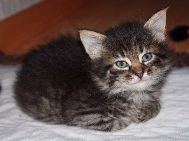 Отдам в дар: Котята в добрые руки фото2