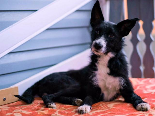 Отдам в дар: Собачка Евочка ищет любящую семью