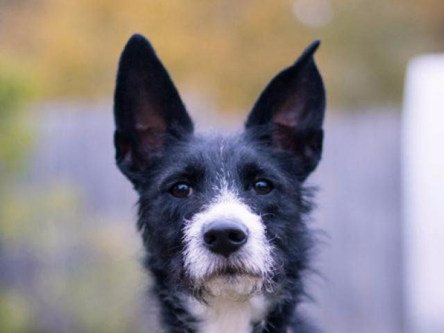 Отдам в дар: Собачка Евочка ищет любящую семью фото2