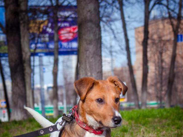 Отдам в дар: Самый милый щенок в добрые руки фото2