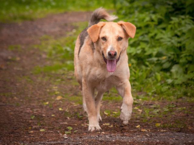 Отдам в дар: Необыкновенно милая собака Кэри в добрые руки фото3
