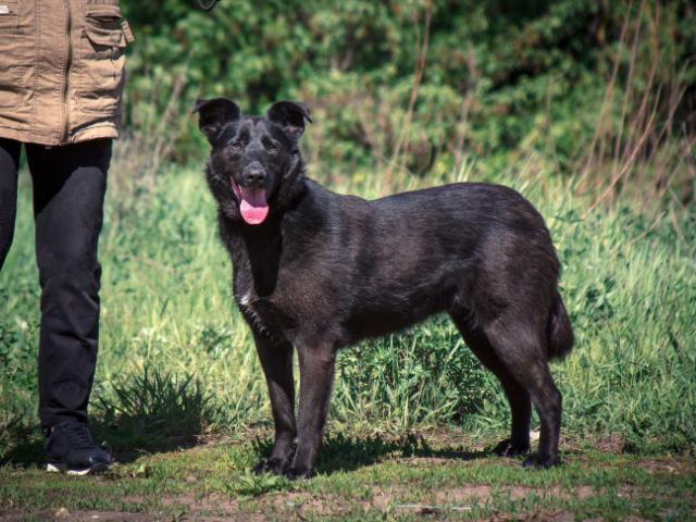Отдам в дар: Чёрная собака в добрые руки