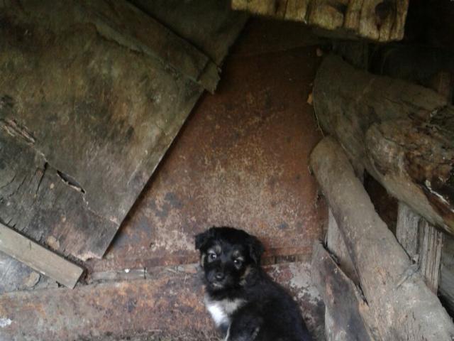 Отдам в дар: Отдам в добрые руки щенка (дворняжки) фото3