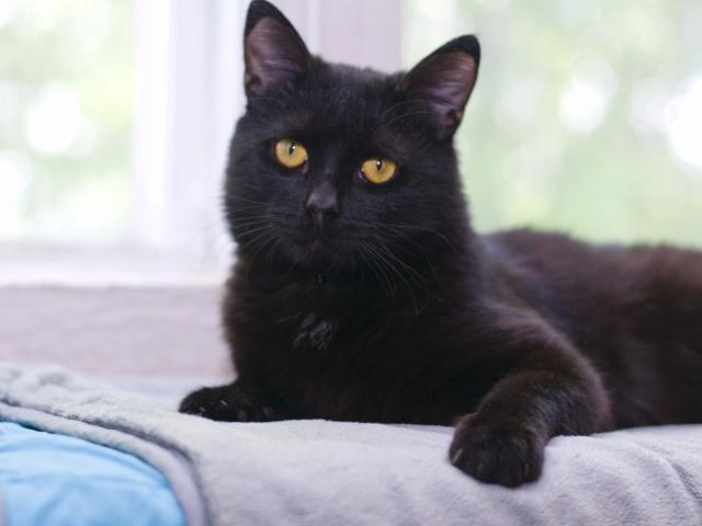 Отдам в дар: Ищет дом милый котик Котя