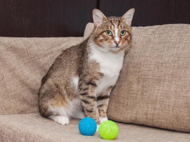 Отдам в дар: Красивый котик Сильвер в добрые руки