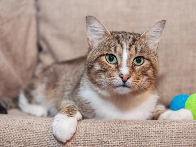 Отдам в дар: Красивый котик Сильвер в добрые руки фото3
