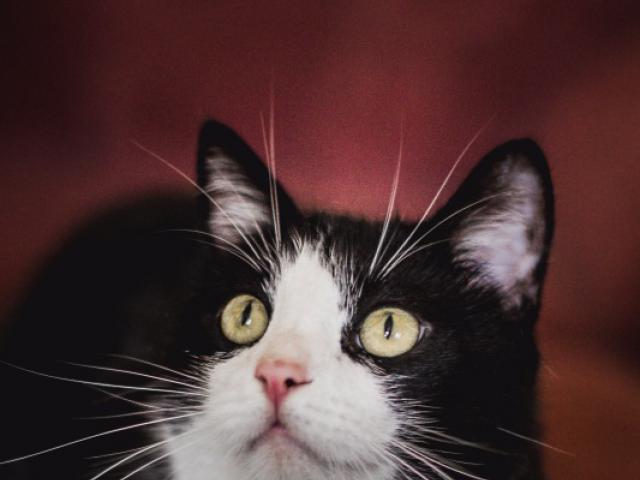 Отдам в дар: Глазастик Том ищет дом фото2