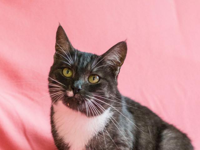 Отдам в дар: Кошка Дашка фото2