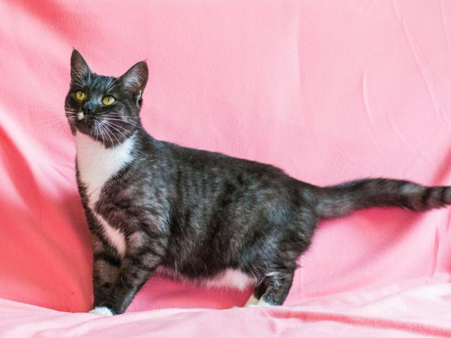 Отдам в дар: Кошка Дашка фото3