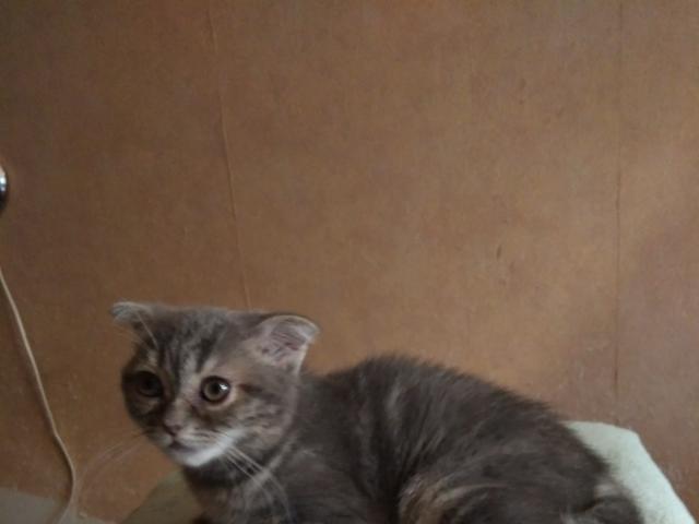 Продаю: Милые котята