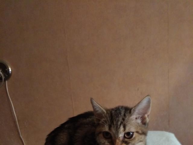 Продаю: Милые котята фото3