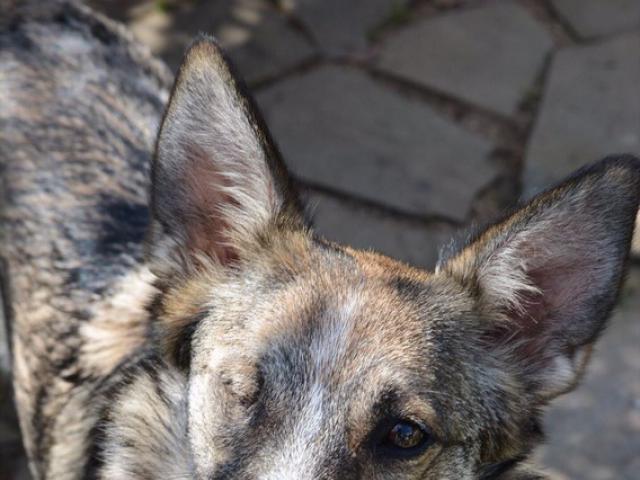 Отдам в дар: Москва и МО Особенная собачка ищет дом… фото3