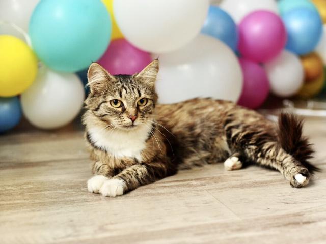 Отдам в дар: Чудесная кошка Фиша в добрые руки