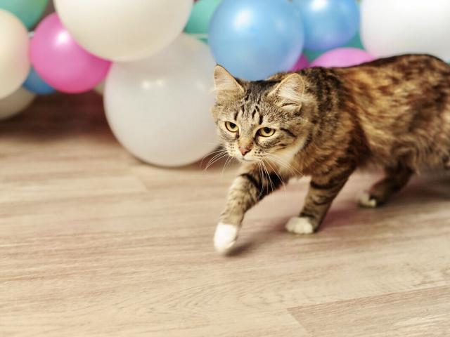 Отдам в дар: Чудесная кошка Фиша в добрые руки фото2