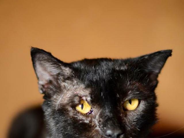 Отдам в дар: Настрадавшийся кот Лео в добрые руки фото3