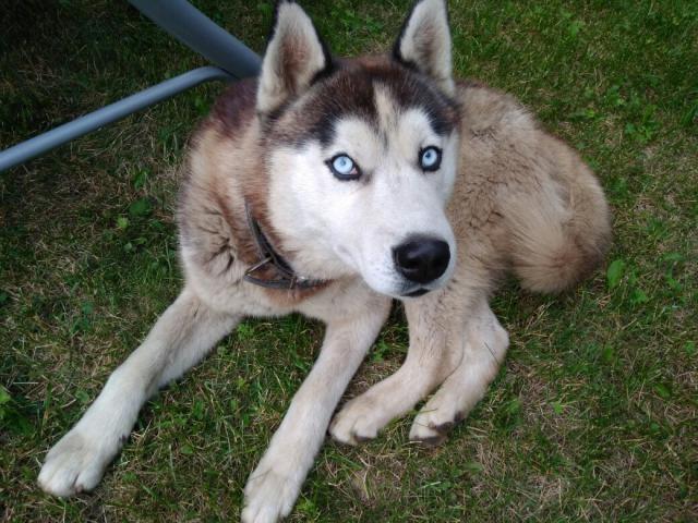 Отдам в дар: Пропала собака
