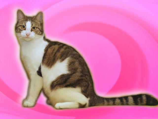 Отдам в дар: Леди-кошка, шкодная немножко