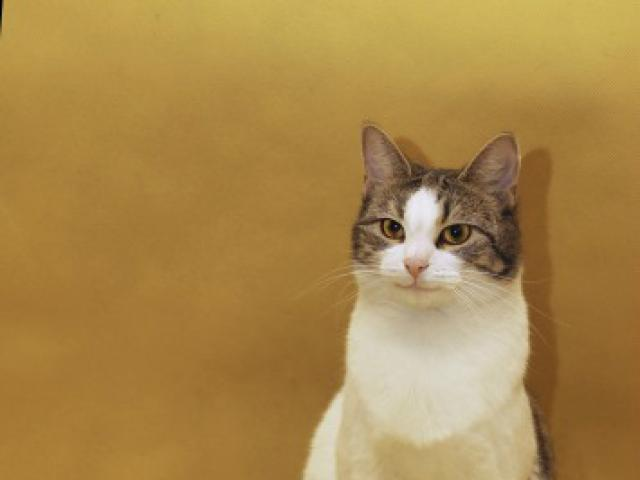 Отдам в дар: Леди-кошка, шкодная немножко фото2