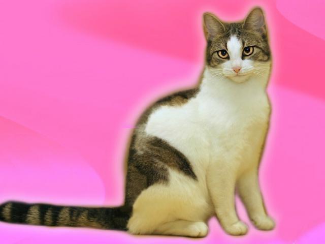 Отдам в дар: Леди-кошка, шкодная немножко фото3