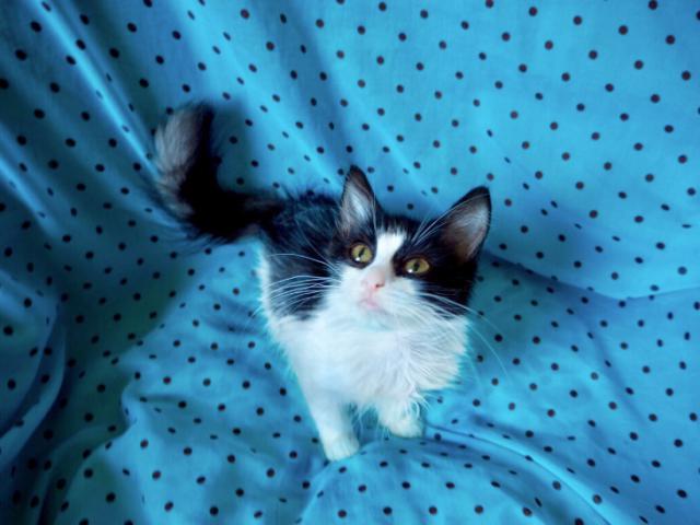 Отдам в дар: Котята Марсель и Маркиза ищут дом фото3