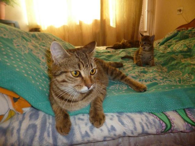 Потерялся/Нашелся: потерялась кошка фото2