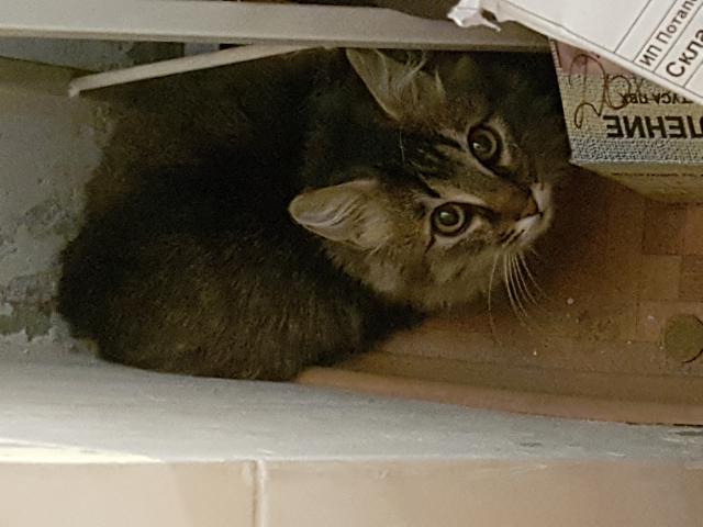 Отдам в дар: Пушистый котенок ищет дом