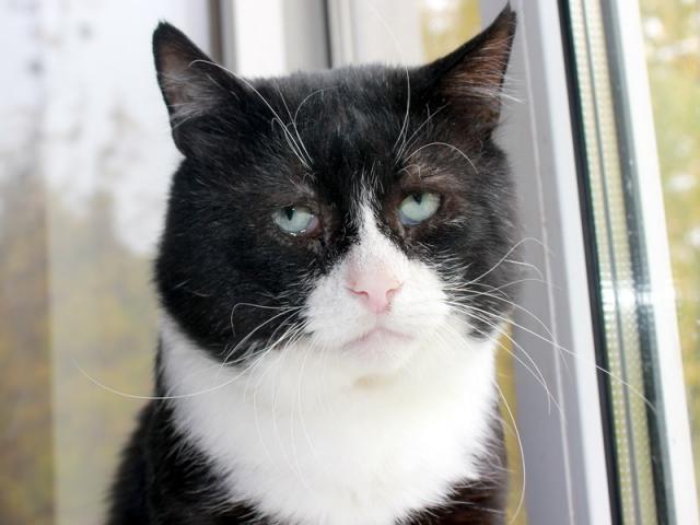 Отдам в дар: Самый грустный кот на свете