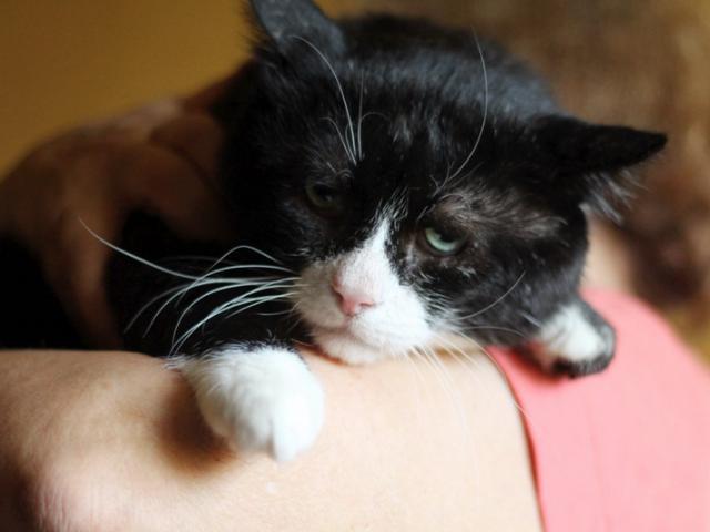 Отдам в дар: Самый грустный кот на свете фото3
