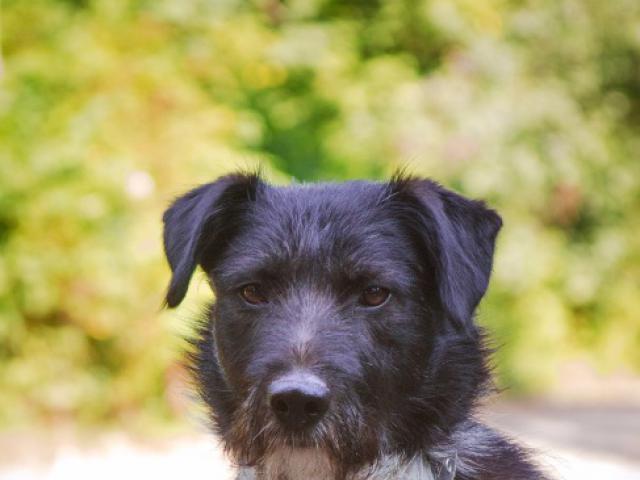 Отдам в дар: Чудесный пес Берт в добрые руки фото3